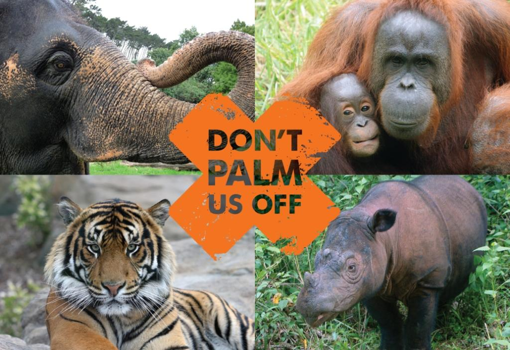 What is in your beauty products? Say No to Palm Oil